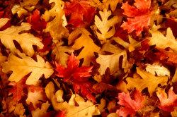Getrocknete Blätter bilden eine hübsche Herbstdekoration.