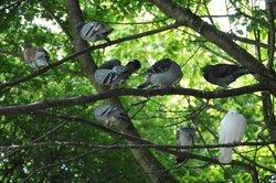 In der freien Natur finden Tauben reichlich Futter.