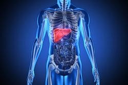 Die Leber ist eines der zentralen Organe im Körper.