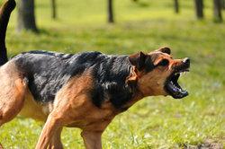 Hunde lösen oft Ängste aus.