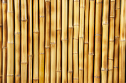 Bambus für Zäune und Möbel nutzen