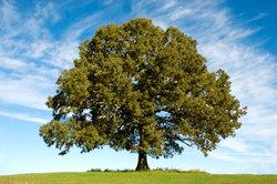 """""""Alt wie ein Baum"""" ist einer der bekanntesten Hits der Puhdys."""