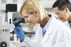 Klassische Stellen in der Biologie sind an Universitäten und in der Pharmaindustrie zu finden.