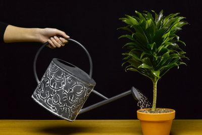 Mit diesen nützlichen Tipps müssen Ihre Pflanzen im Urlaub nicht mehr von Hand gegossen werden.