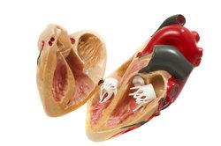 Das Herz als Organ kann keine Schmerzen auslösen.