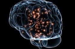 Auch in der Psychologie werden Sie sich sehr viel mit dem Gehirn beschäftigen.