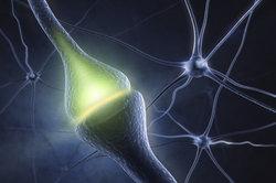Die Anzahl der Nervenzellen im Körper lässt sich nicht bestimmen.
