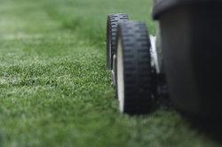 Die Rasenpflege sollte ganzjährig optimal erfolgen.