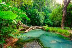 Auf den Spuren der Dschungelstars