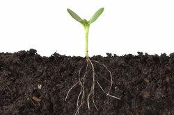 Humus wird für das Pflanzenwachstum benötigt.