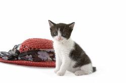 Den Kauf einer Katze sehr gut überlegen