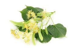Lecker und gesund - Lindenblütentee