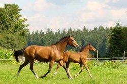 Schwungvoller Trab: Ein Traum für Reiter