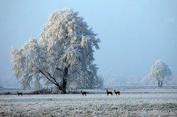 Wie verhalten sich Rehe im Winter?