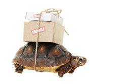 DHL bringt Ihre Pakete schnell und zuverlässig zum Zielort.