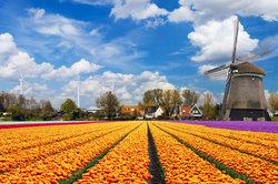 Viele Deutsche verbringen ihren Urlaub in den Niederlanden.