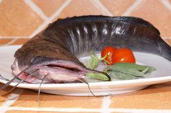Ein Welsfilet können Sie auch schmackhaft im Ofen zubereiten.