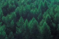 Im Wald kann die Seele Kraft tanken.