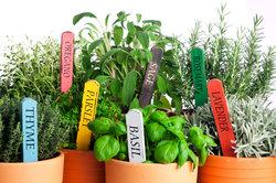 Kräuter gehören in den gesunden Garten.