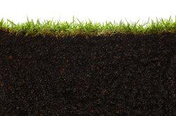 Der Boden versorgt die Pflanzen an der Erdoberfläche mit wichtigen Nährstoffen.