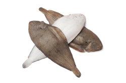 Plattfische unterscheiden sich in manchen Merkmalen.
