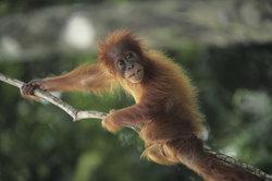 Die Tier-und Artenvielfalt Indonesiens ist gigantisch.