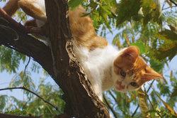 Nur dank des beweglichen Skeletts kann eine Katze solche Leistungen erbringen.