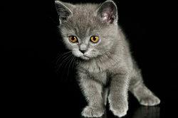 Warum Katzen auf der Stelle treten