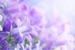Blüten laden Insekten nicht ohne Eigennutz ein.