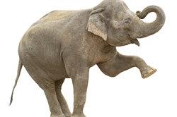 Der Elefant nimmt im Buddhismus einen hohen Stellenwert ein.