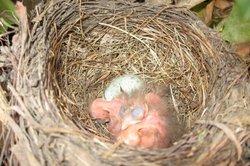 Ein aus dem Ei geschlüpftes Säugetier?