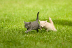 Katzen sind schnelle Kurzstreckenläufer.