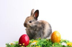 Wichtige Bestandteile von Ostern: Hase und Eier