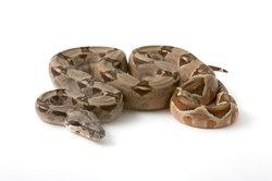 Schlangen im Terrarium halten