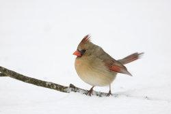 Im Winter suchen die Vögel länger nach Futter.