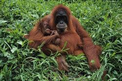 Wie eng verwandt ist der Affe dem Menschen? Das Average-Distance-Verfahren kann es zeigen.