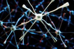 Zellen sind von einer Membran umschlossen, durch die Ionen diffundieren.