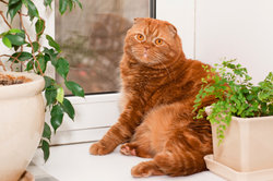 Zimmerpflanzen sind auch für Katzen interessant.