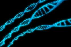 Die DNA hat die Gestalt einer Doppelhelix.