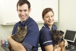 Tierarzt - noch immer ein Traumberuf vieler junger Menschen