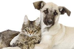Hunde mögen Katzen, aber auch leider oft ihre Häufchen.