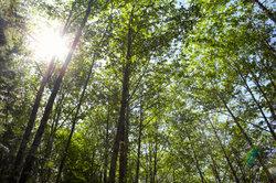 Bäume wachsen einzeln und in Gruppen.