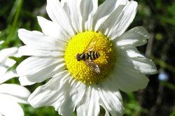 Wespenstiche sind sehr unangenehm.