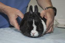 Bringen Sie Ihr Kaninchen bei Auffälligkeiten zum Tierarzt