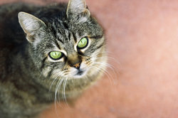Lassen Sie Ihre Katze regelmäßig impfen.