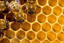 Gesunde Bienen - Oxalsäure kann helfen.