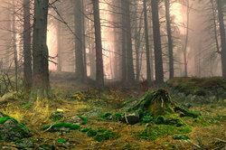Strauchpilze kommen vor allem in Wäldern vor.