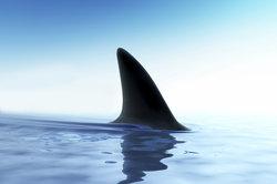 Die Haifisch-Parabel von Brecht gehört in vielen Deutschkursen zur Pflichtlektüre.
