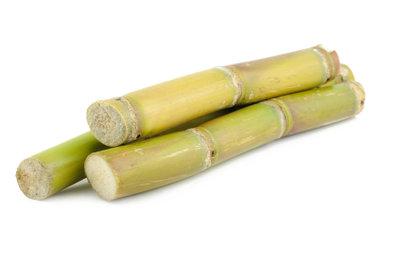 Der Mini-Bambus ist sehr dekorativ.