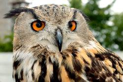 Eulen - schöne Tiere und geschickte Jäger